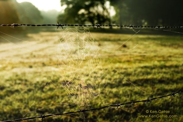 Wordless Wednesday: Beautifully Broken http://tamarabeachum.com/beautifully-broken/ (c) Ken Gehle Photography