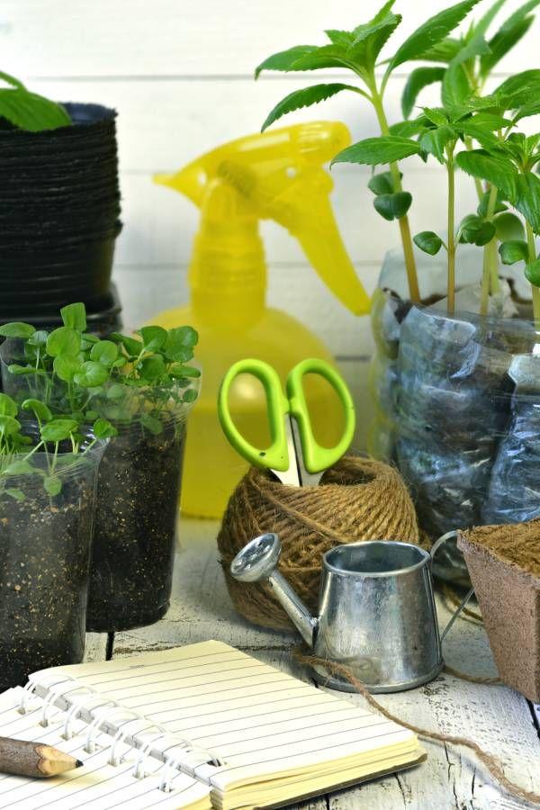 Pflanzen Giessen Im Urlaub So Werden Sie Gut Gewassert Pflanzen