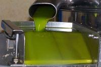 L'huile d'olive à la sortie de la centrifugeuse