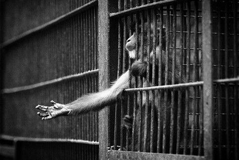 CompassionWorks Intl @CWIntl  4h4 hours ago  More   Animals do not belong in captivity. #BoycottTheZoo