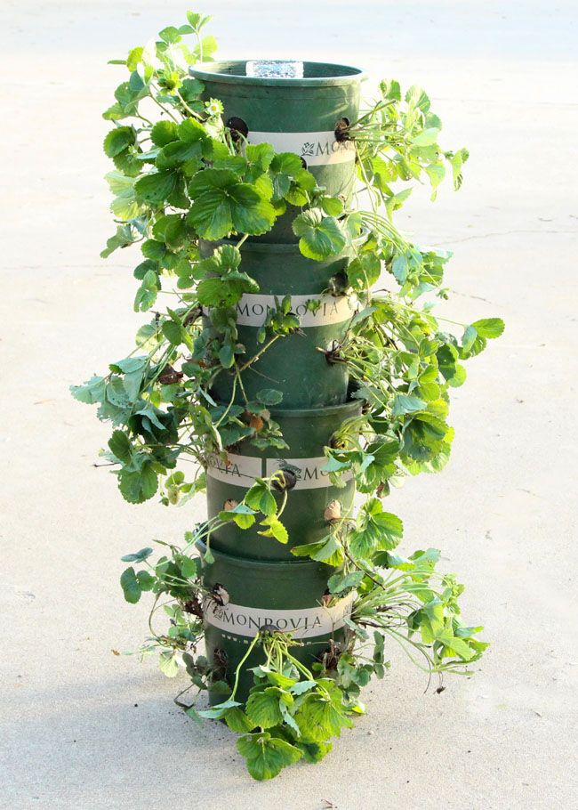 Hometalk :: DIY Strawberry Tower With Built in Reservoir