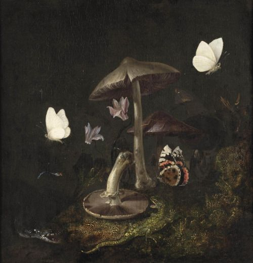 """the-cinder-fields: """"Otto Marseus van Schrieck, A 'sotto bosco' with mushrooms, butterflies, a dragonfly, a snake and a lizard , 17th century """""""