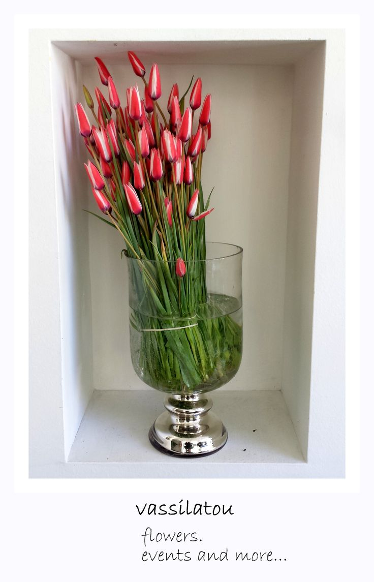 red and white tulips in our vase