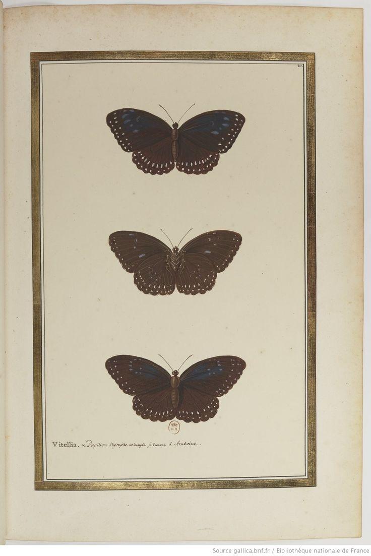 1000 id es propos de dessin poisson sur pinterest for Koi papillon