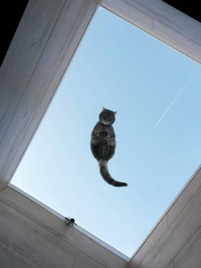 22 Fotos Que Demuestran Que Los Gatos Solo Deberían Vivir Sobre Mesas De Cristal Cats Cat Sleeping Cute Cats