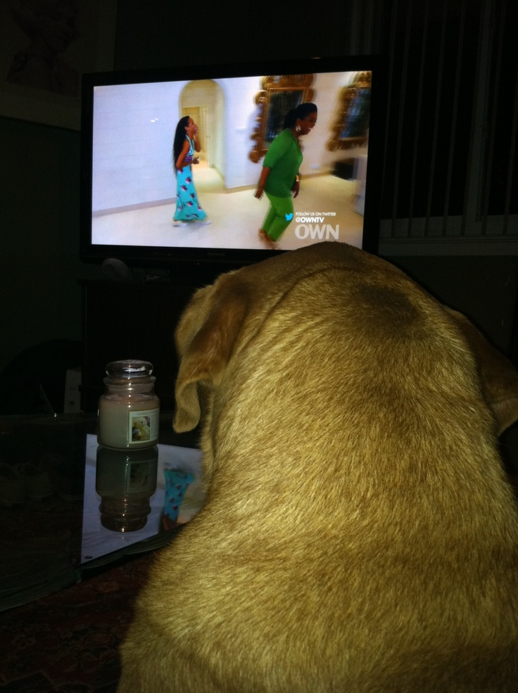 Rihanna and Oprah: Dogs Watches, Watches Tv