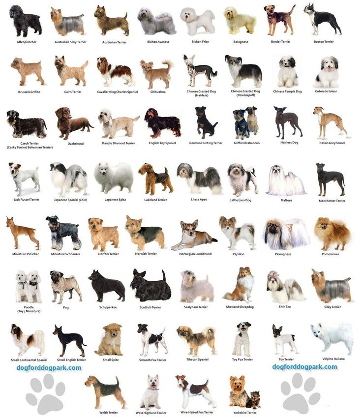 Com certeza você já imaginou vários nomes possíveis para seu futuro cãozinho.