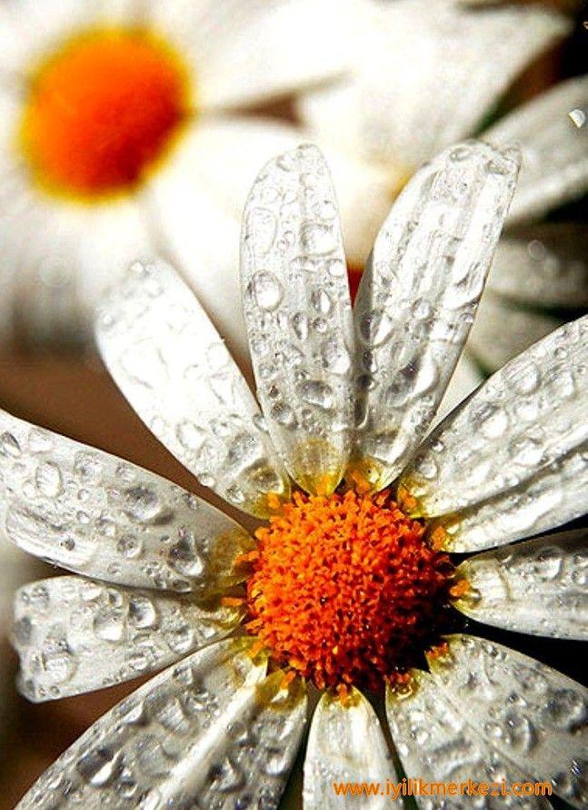 Günün Olumlaması : İçimdeki yaratıcı güçle bağlantıdayım. Yaratıcı , pozitif düşünceler kaynağıyım. İyiyi, güzeli, faydalıyı görüyorum, buluyorum, paylaşıyorum. En iyisine layığım ...  -iyilik'te #gününolumlaması #bybegumkarace #iyilikmerkezi #günegüzelbaşla #günepozitifbaşla #tekraret #papatyalar #29042016