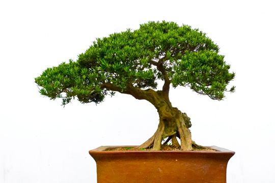 Bonsai tree types landscapers seva call blog tree of for Different kinds of bonsai trees