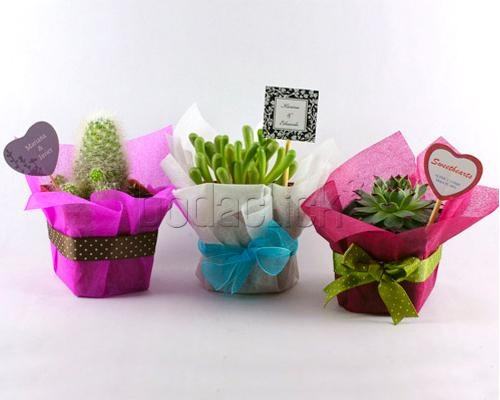 Originales Recuerdos Ecológicos This would be a lovely end of year thank you gift to a teacher....No prickly cacti though!