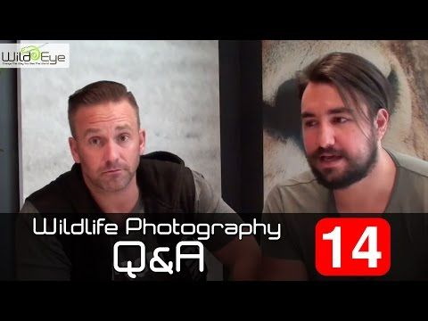 Wildlife Photography Q&A: Episode 14