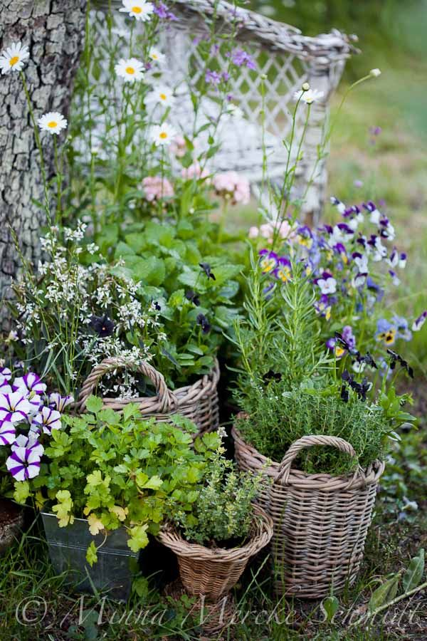 Baskets as containers featuring Johnny Jump-ups + an assortment of herbs (fyi, rosemary gets far too large for this application)