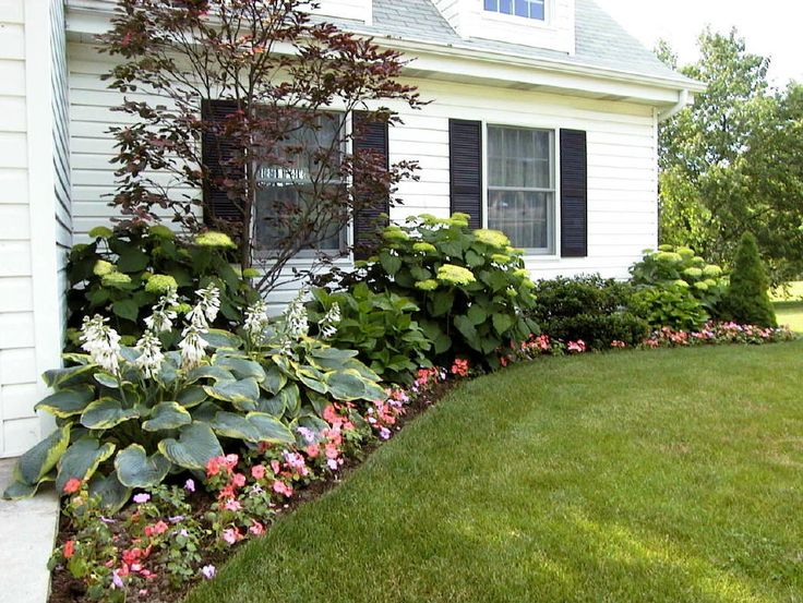 A mix of hostas hydrangeas and a japanese maple for Small front of house landscaping
