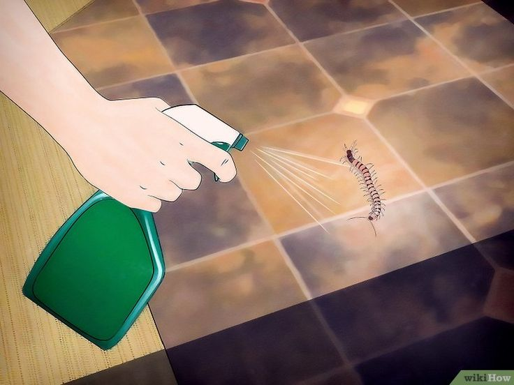 How to get rid of centipedes 10 steps with pictures
