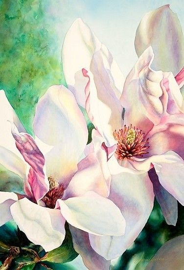 Magnolia Soulangiana 'San Jose' II by Laurie Asahara Watercolor ~ 30 x 22