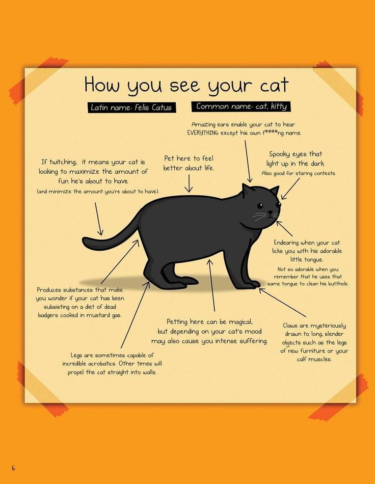 Cute Illustrations Perfectly Depict How Cats And Humans See Each Other
