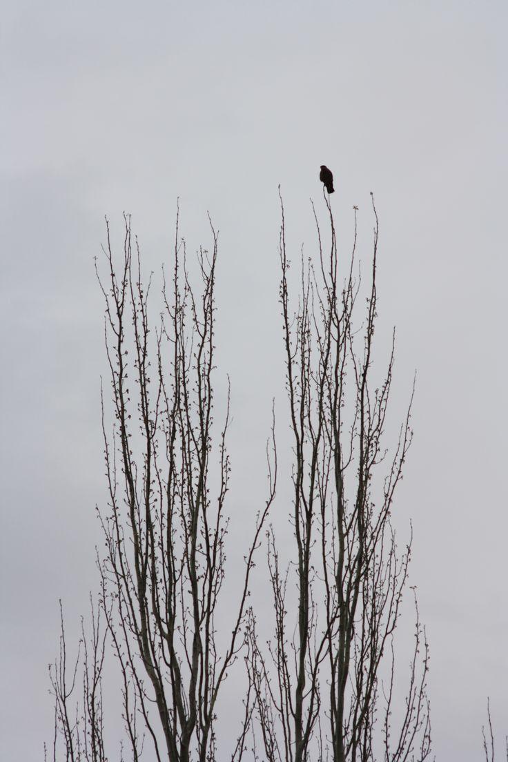 Bird/ MS