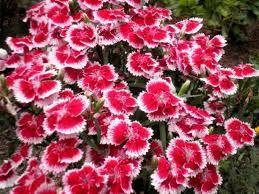 Znalezione obrazy dla zapytania kwiaty ogrodowe