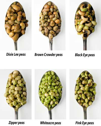 Image result for zipper peas