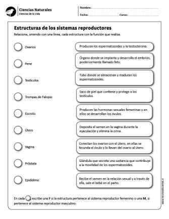 Estructuras de los sistemas reproductores