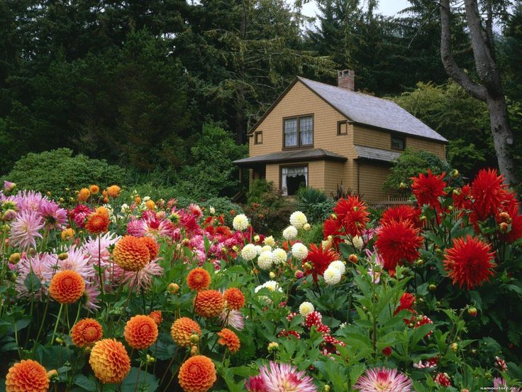 Gardens Pictures   Garden House And Dahlias, Shore Acres State Park, Oregon    Gardens Wallpapers