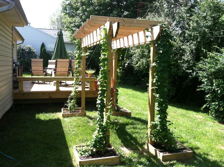 2013 Hop garden photo thread - Page 61 - Home Brew Forums