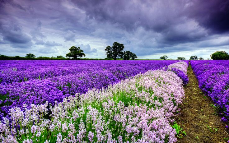 Gallery For > Flower Field Wallpapers