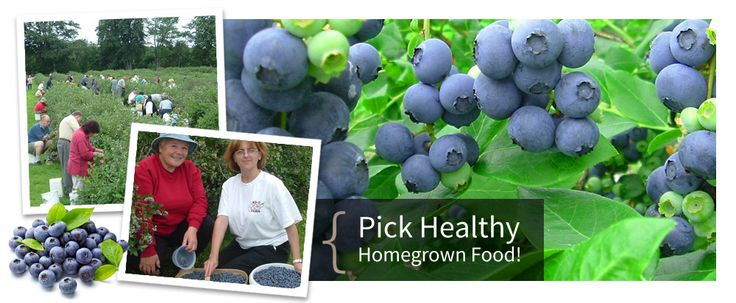 Barrie Hill Farms Blueberries