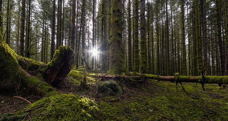 Forest Light by Eirik Sørstrømmen on 500px