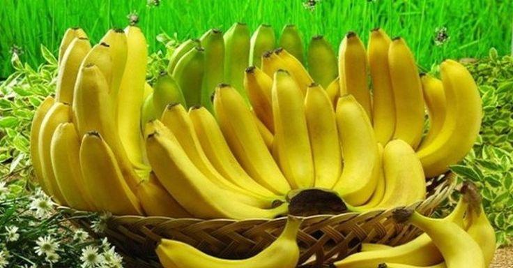 Banány sú obľúbeným tropickým ovocím, ktoré lieči celú paletu rôznych ochorení. Vďaka svojim liečivým účinkom sa radí medzi super potraviny, apreto by ste ho mali zaradiť do svojho každodenného jedálnička. Banány vám môžu pomôcť vboji proti rannej nevoľnosti, osteoporóze, slepote, depresii, cukrovke či dokonca prirakovine