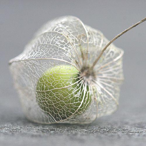 Physalis/Cape Gooseberry