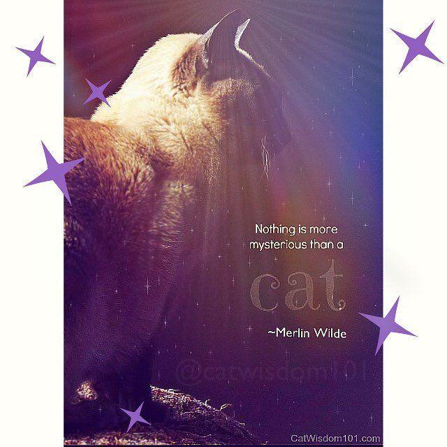 Senior Cat Quotes: 616 Best Cat Wisdom 101 Cats Images On Pinterest
