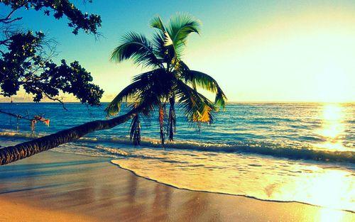 beautifulBuckets Lists, Beach Sunsets, Beautiful, Summer Beach, Palms Trees, Islands, Places, Beach Pictures, Tropical Beach