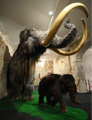 Vine amb els més petits al Museu del Mamut a Barcelona #sortirambnens