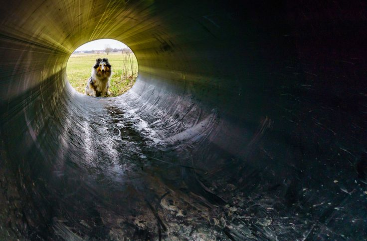 Dogtunnel