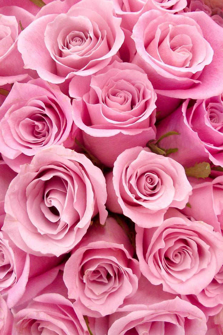 Pink Roses                                                                                                                                                      Más