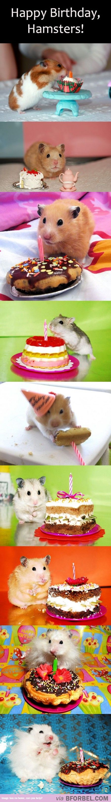 9 Hamsters Celebrating Their Birthdays…