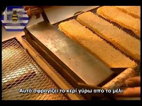 Πως φτιάχνεται το μέλι; - www.Ellinikomeli.gr