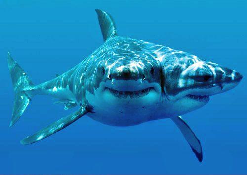 26 Best Sharknado Images On Pinterest Shark Week