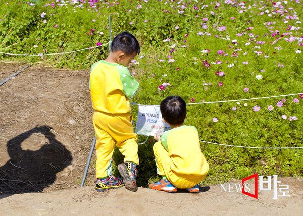 """<<주말 나들이 ´구리한강 코스모스공원´>> 두명의 유치원생들이 코스모스 주변 둘레에 쳐진  로프에 달린 표시 """"들어가시면 코스모스가 아파해요"""" 라는 글을 읽으면서 한 꼬마가 왜 코스모스가 아파하지  라고 한다.  (구리한강시민공원 코스모스 축제장에서 © 뉴스바로 장덕수 기자 2014.10.9)"""