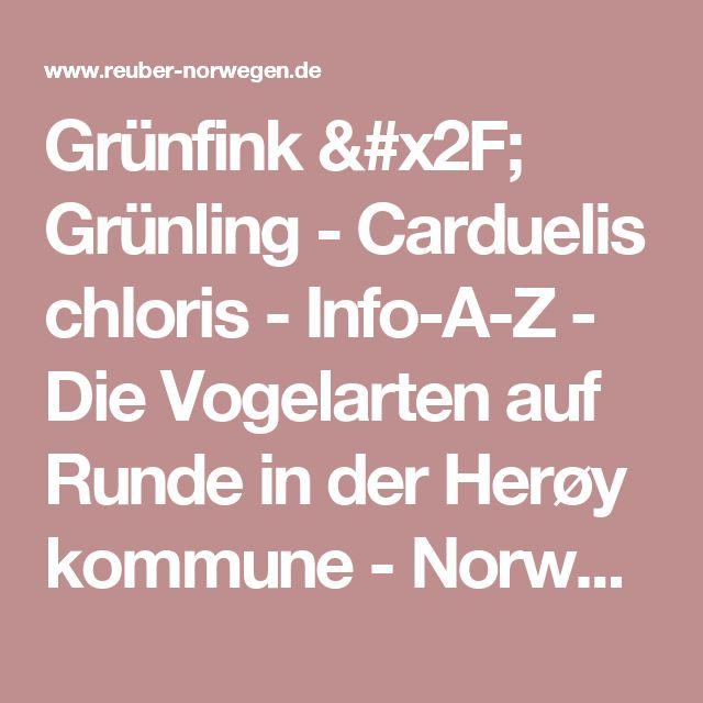 Grünfink / Grünling - Carduelis chloris - Info-A-Z - Die Vogelarten auf Runde in der Herøy kommune - Norwegen / Norge / Norway