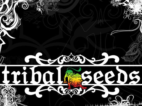 tribal seeds - Google Search | Pure Vibration One Love ...