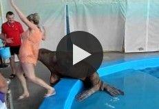 Walrus Smacks Girl's Butt