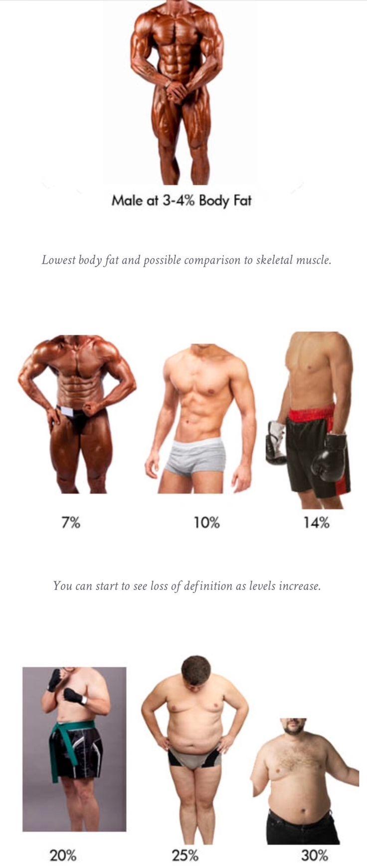 chart showing body fat percentage