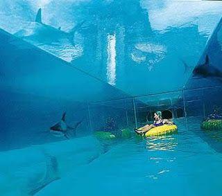 Atlantis Bahamas: Sightseeing In The Bahamas. I want to be here!