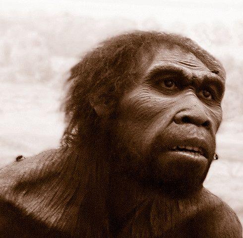 Homo ergaster es un homínido extinto, propio de África. Se estima que vivió hace entre 1,9 y 1,4 millones de años.El Homo ergaster procede probablemente de Homo habilis y es descrito por algunos autores como el antecesor africano de Homo erectus. La talla y proporción del cuerpo es similar a la nuestra El cerebro sufre un aumento importante, rondando los 850 cm³