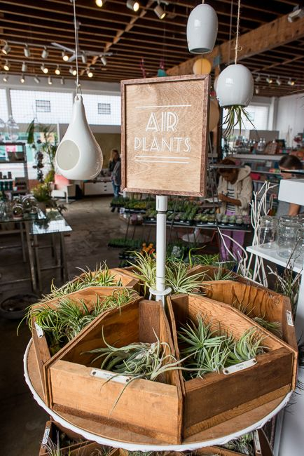 Air Plants - $2 to $8 http://www.shoppigment.com/plants/ I would max out my credit card if I ever stepped foot in this store!
