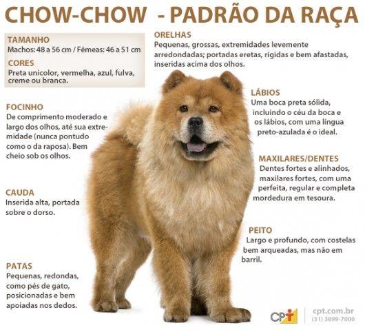 Padrão da raça Chow Chow