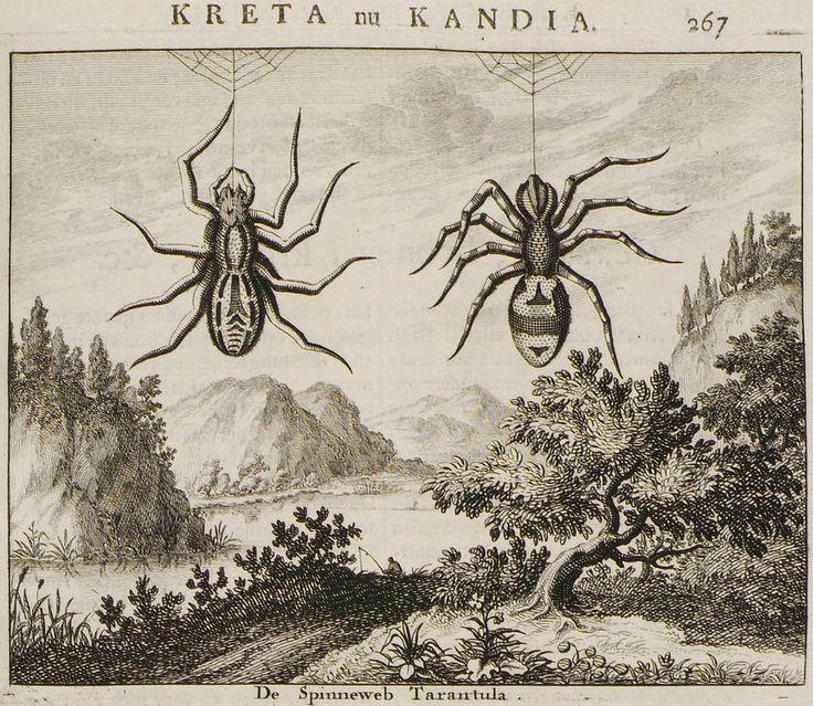 1688 Ταραντούλες από την Κρήτη. - DAPPER, Olfert - ME TO BΛΕΜΜΑ ΤΩΝ ΠΕΡΙΗΓΗΤΩΝ - Τόποι - Μνημεία - Άνθρωποι - Νοτιοανατολική Ευρώπη - Ανατολική Μεσόγειος - Ελλάδα - Μικρά Ασία - Νότιος Ιταλία, 15ος - 20ός αιώνας
