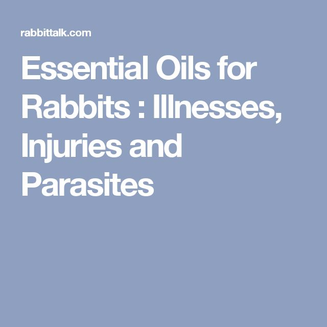 Essential Oils for Rabbits : Illnesses, Injuries and Parasites